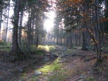 Гигантские горы в Польше и чехе Стоковое Изображение RF