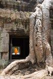 Гигантские корни и монах дерева в выпускном вечере Angkor Wat животиков виска Стоковые Фотографии RF