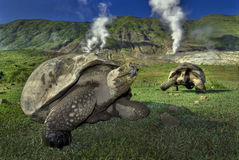 Гигантские черепахи внутри кратера вулкана, Галапагос Стоковое Изображение