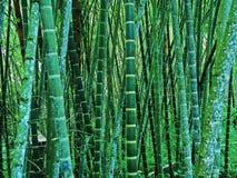 Гигантский бамбук Стоковое фото RF