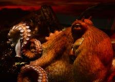 гигантский восьминог Стоковое Фото