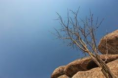 Гигантский камень, сухое дерево в пустыне Namibe вышесказанного anisette стоковые фотографии rf