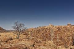 Гигантский камень, сухое дерево в пустыне Namibe вышесказанного anisette стоковые фото