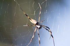 Гигантский паук на ем spiderweb ` s Стоковая Фотография