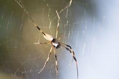 Гигантский паук на ем spiderweb ` s Стоковые Изображения