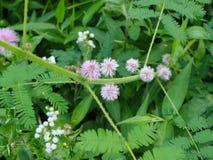 Гигантский чувствительный широкий цветок Стоковые Изображения