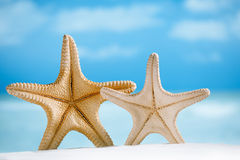 2 гигантских морской звёзды с белыми песком, океаном, пляжем и seascape Стоковые Изображения