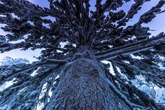 Гигантское дерево в Jukkasjarvi, Швеции стоковые изображения rf