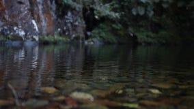 Гигантское fromfrom жука тропическая часть боливийского конца дождевого леса вверх, макрос Большой тропический вид жука видеоматериал