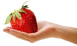 гигант ягоды стоковые изображения