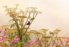 Гималайская птица сидя на ветви стоковое фото rf