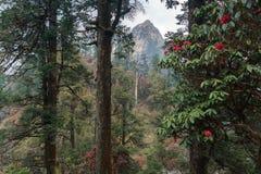Гималайские горы, Непал Цветя рододендроны стоковые фотографии rf