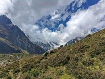 Гималайские яки и лошади пася траву стоковая фотография
