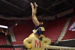 2015 гимнастика дам NCAA - WVU Стоковое Фото