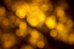 Гинкго нерезкости Стоковая Фотография RF