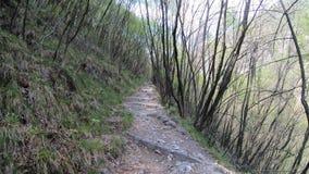 Гипер упущение на путях в древесинах итальянца Альп r Общее назначение сток-видео