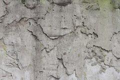 Гипсолит бетона Стоковые Фото