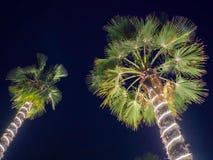 Гирлянды рождества и светлое освещение на пальме 2 на ноче Дубай Стоковые Фотографии RF