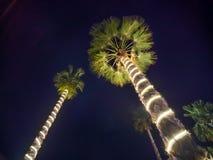 Гирлянды рождества и светлое освещение на пальме 2 на ноче Дубай Стоковое фото RF