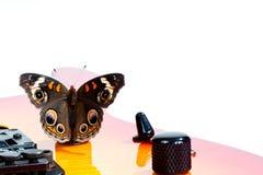 гитара бабочки конского каштана Стоковое фото RF