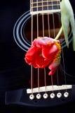 Гитара и красный тюльпан. Стоковые Изображения