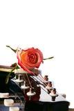 Гитара и роза красного цвета. Стоковые Изображения