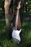Гитара упаденная в лес Стоковые Фото