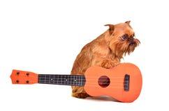 гитарист собаки стоковые изображения