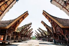 Главная улица традиционной деревни Tana Toraja с буйволом на переднем плане, tongkonan дома Patawa, Сулавеси, Индонезия Стоковое Изображение RF