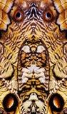 Глаза бабочки сыча Стоковое фото RF