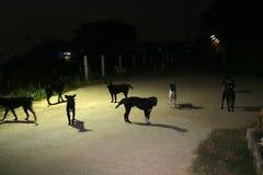 глаза бездомной собаки в nighttime, они ждут еду Стоковые Фото