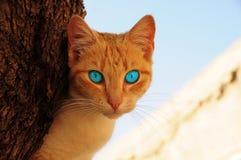 глаза голубого кота Стоковые Фото