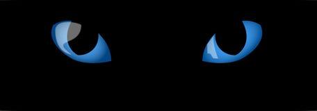 глаза голубых котов Стоковая Фотография RF