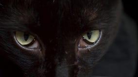 Глаза конца-вверх зеленые черного кота нездоровые глаза 4K сток-видео