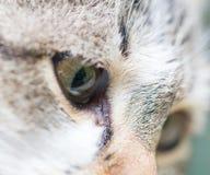 Глаза кота Макрос Стоковое Изображение RF