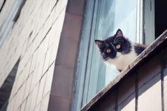 глаза кота усаживая желтый цвет окна Стоковая Фотография