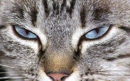 глаза кота Стоковое Изображение RF