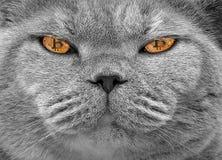Глаза кота cryptocurrency Bitcoin стоковые изображения