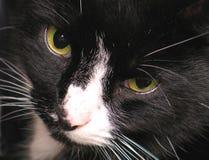 глаза кота s Стоковое Фото