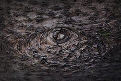 Глаза появляются на кожу дерева стоковая фотография