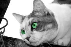 глаза смотря prey Стоковая Фотография