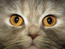 глаза Стоковые Изображения