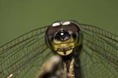 глаза dragonfly Стоковые Фото