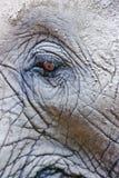 глаз африканского слона Стоковое фото RF