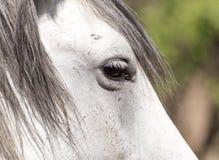 Глаз белой лошади Стоковое Изображение