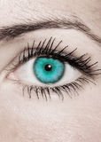 Глаз бирюзы - красивейший, женственно Стоковое Изображение RF