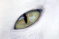 глаз кота стоковая фотография