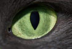 глаз кота Стоковые Фото