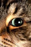 глаз кота стоковое изображение rf