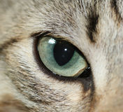 глаз кота Стоковое Изображение